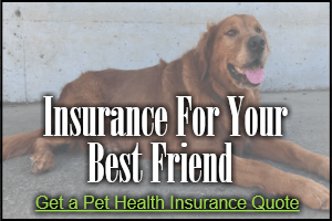 Pet Health Insurance in Florida