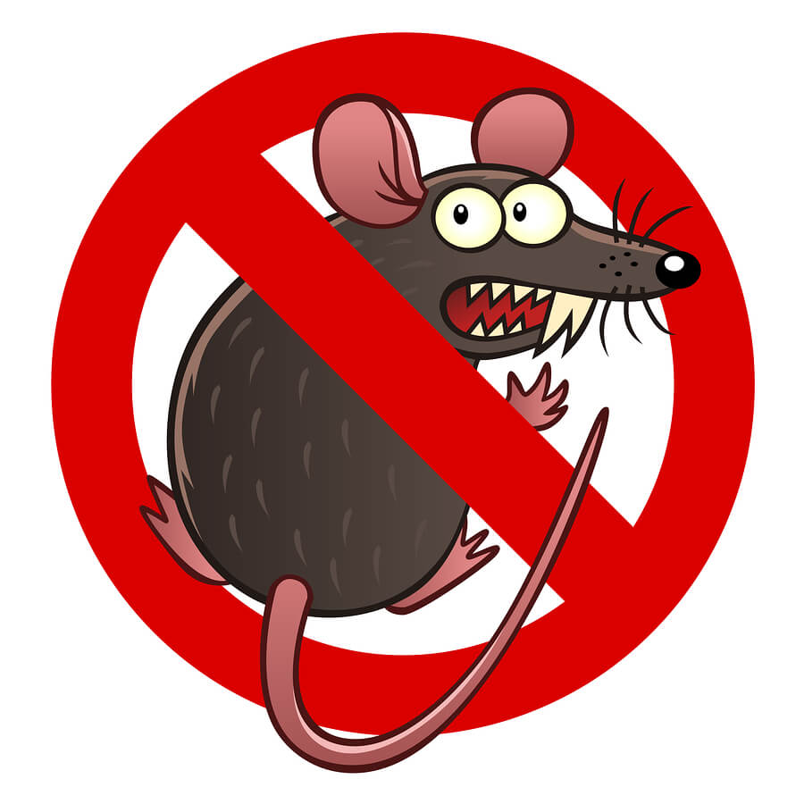 rodent damage coverage for your car in Boynton Beach, FL