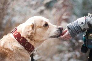 Liability Insurance for Dog Bite Claims Boynton Beach, FL